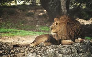 Thumbnail for Spend a day at Safari Aitana near Alicante